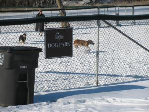 Dogs run through park during snow