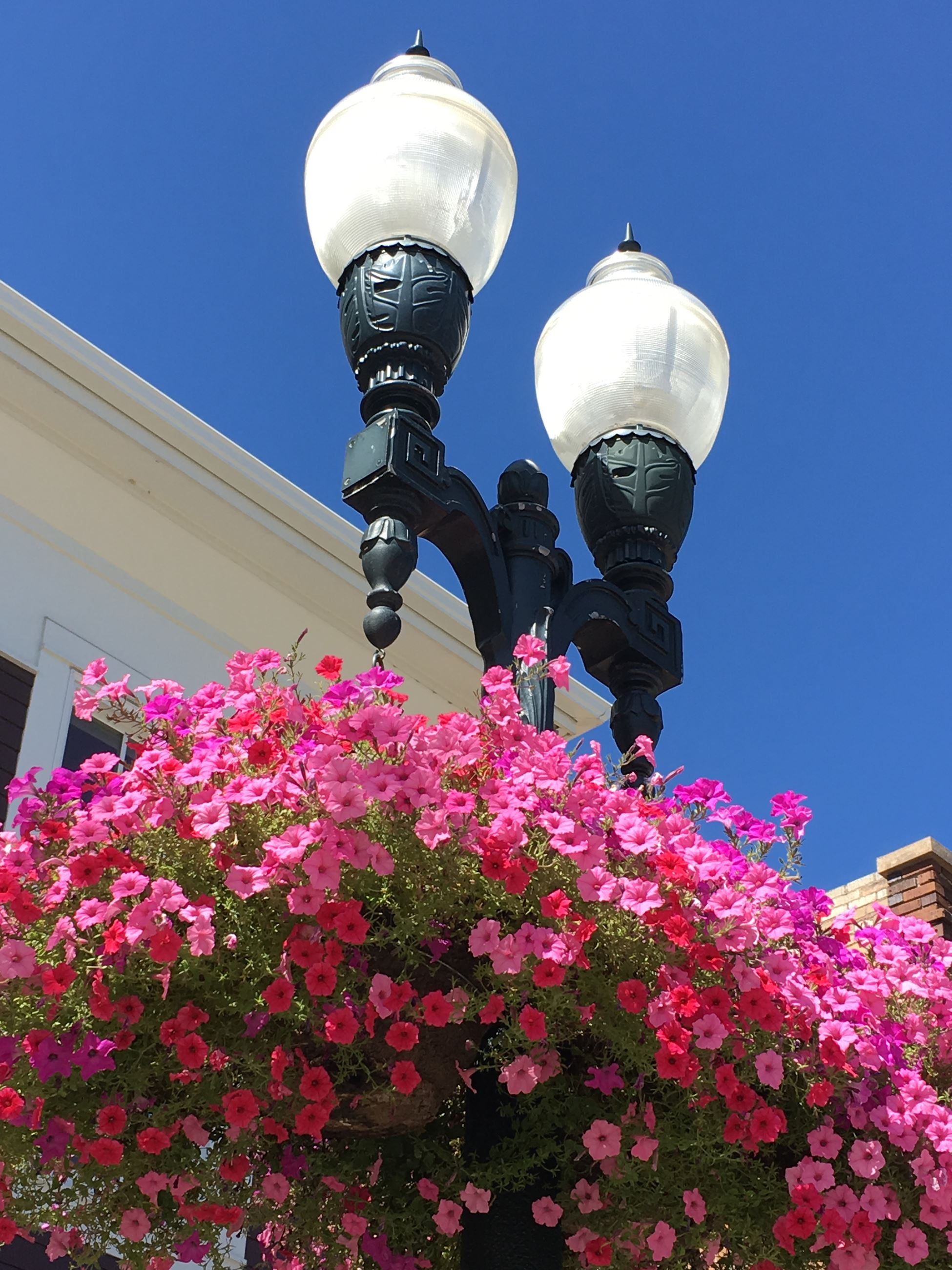 Streetlight and Flower Basket Downtown